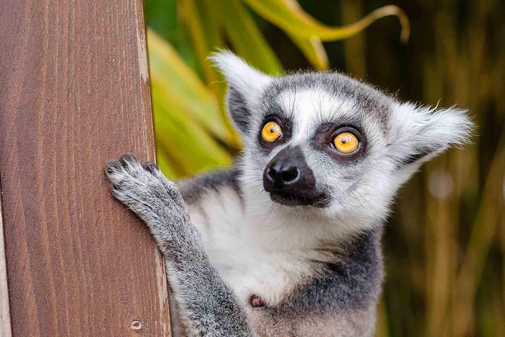 Estate-Madagascar