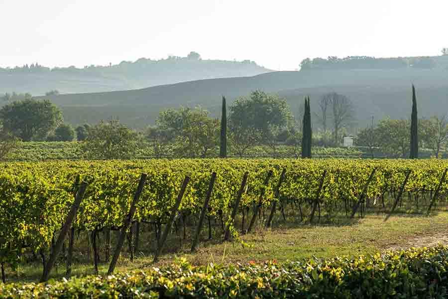 Benessere-in-tenuta-Wine-Tour-in-Vigna